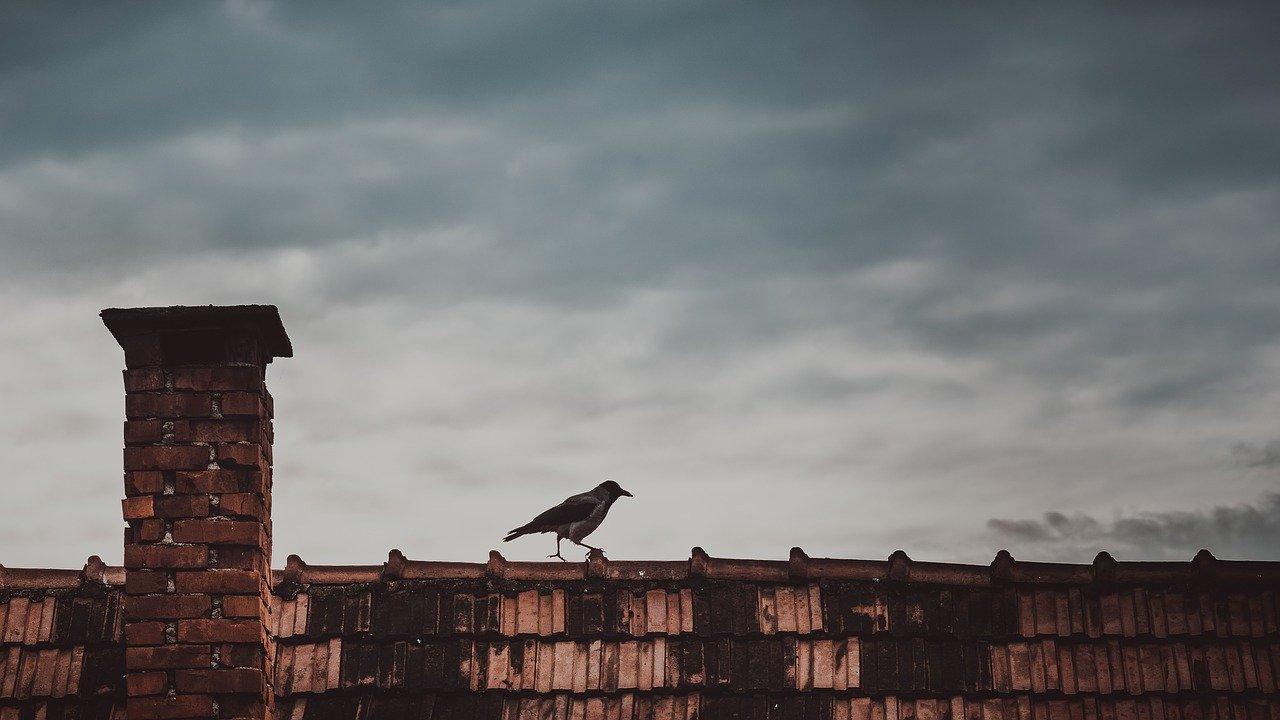 roof, animal, bird